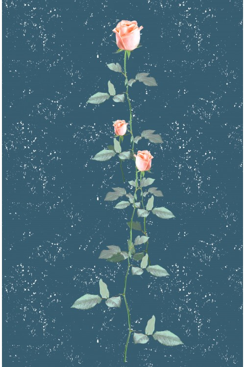 Принт Роза I